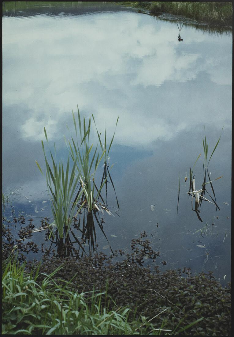 Vue d'une étendue d'eau et des herbes alentours