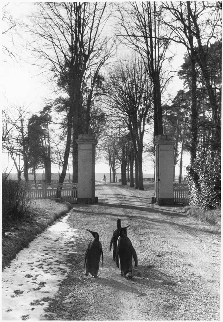 Dans le parc d'un château de Touraine pendant le repos du cirque Pinder